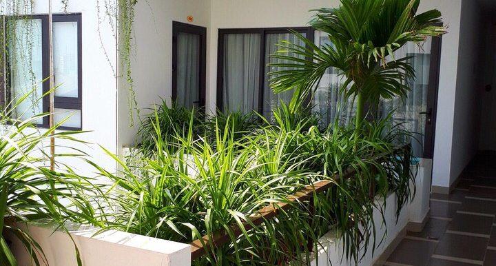 apartment-for-rent-city-da-nang-3121-7